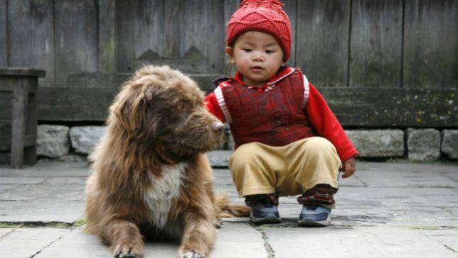 dog rehabilitation2