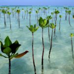 Mangrove Environmental Conservation