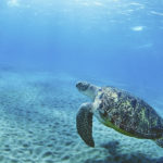 Turtle Conservation Program Bali