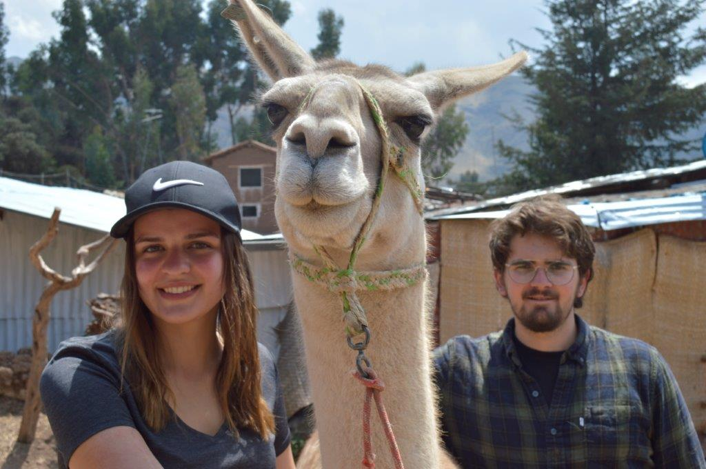 Volunteering at an Alpaca Farm in Cusco, Peru with IVI