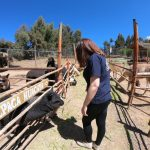 Review of Alpaca Farm in Peru!