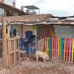 Dog Shelter in Peru Review