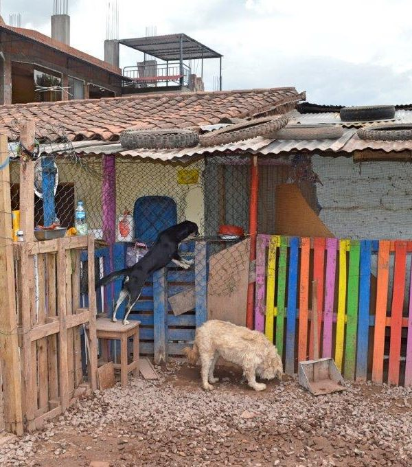 Dog Rehabilitation Peru 1 600x680 - Dog Shelter in Peru Review