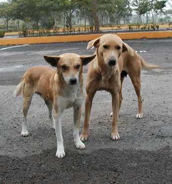 dog rehabilitation