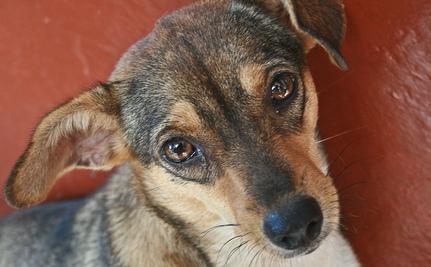 dog rehabilitation3