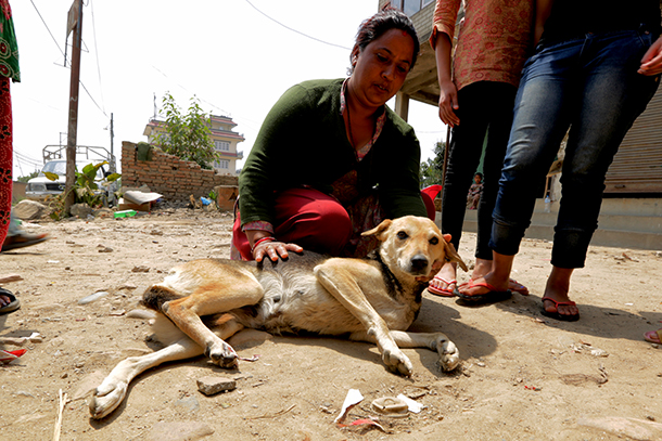 dog rehabilitation4