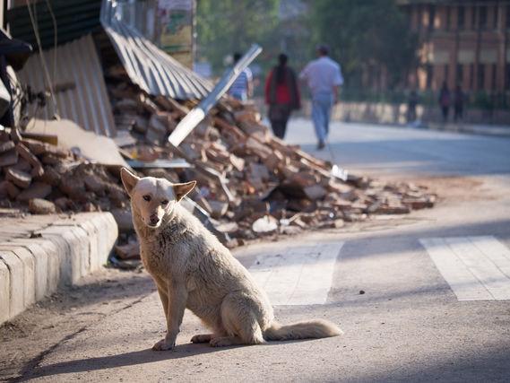 dog rehabilitation5