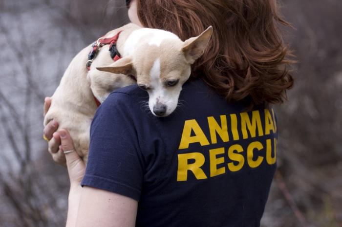 dog rehabilitation6