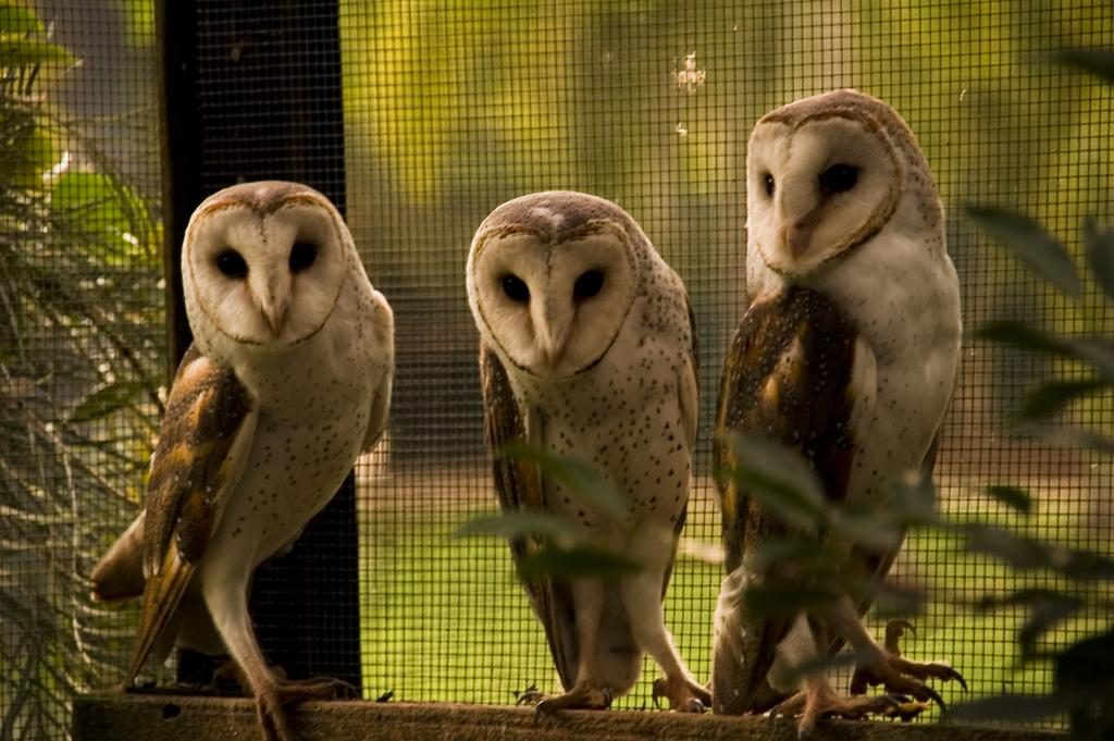 owls 1024x681 - Overseas Volunteer Programs
