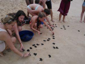 Srilanka turtle conservation