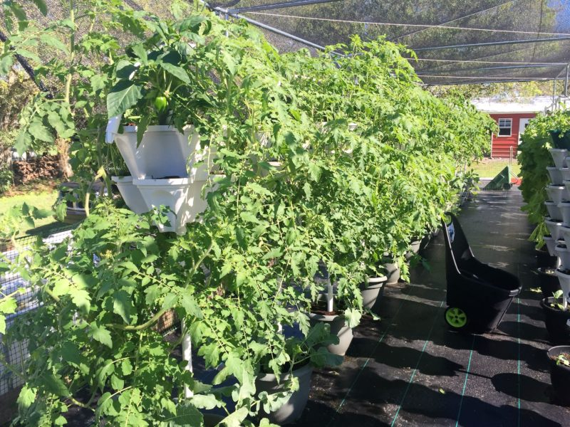Hydroponics for food security project fiji