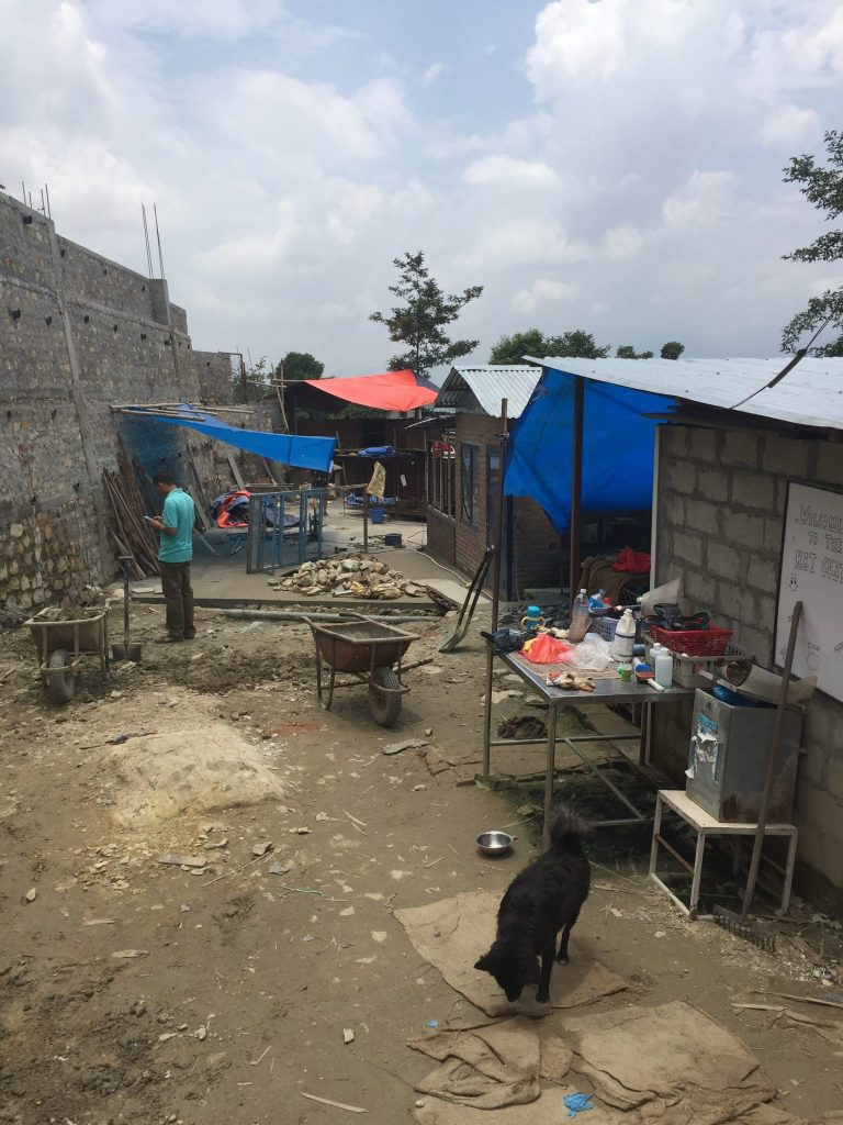 construction placement photo e1531901487968 768x1024 - Nepal Stray Dog Rehabilitation Review