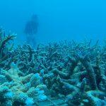 Marine Conservation & Diving Vanuatu
