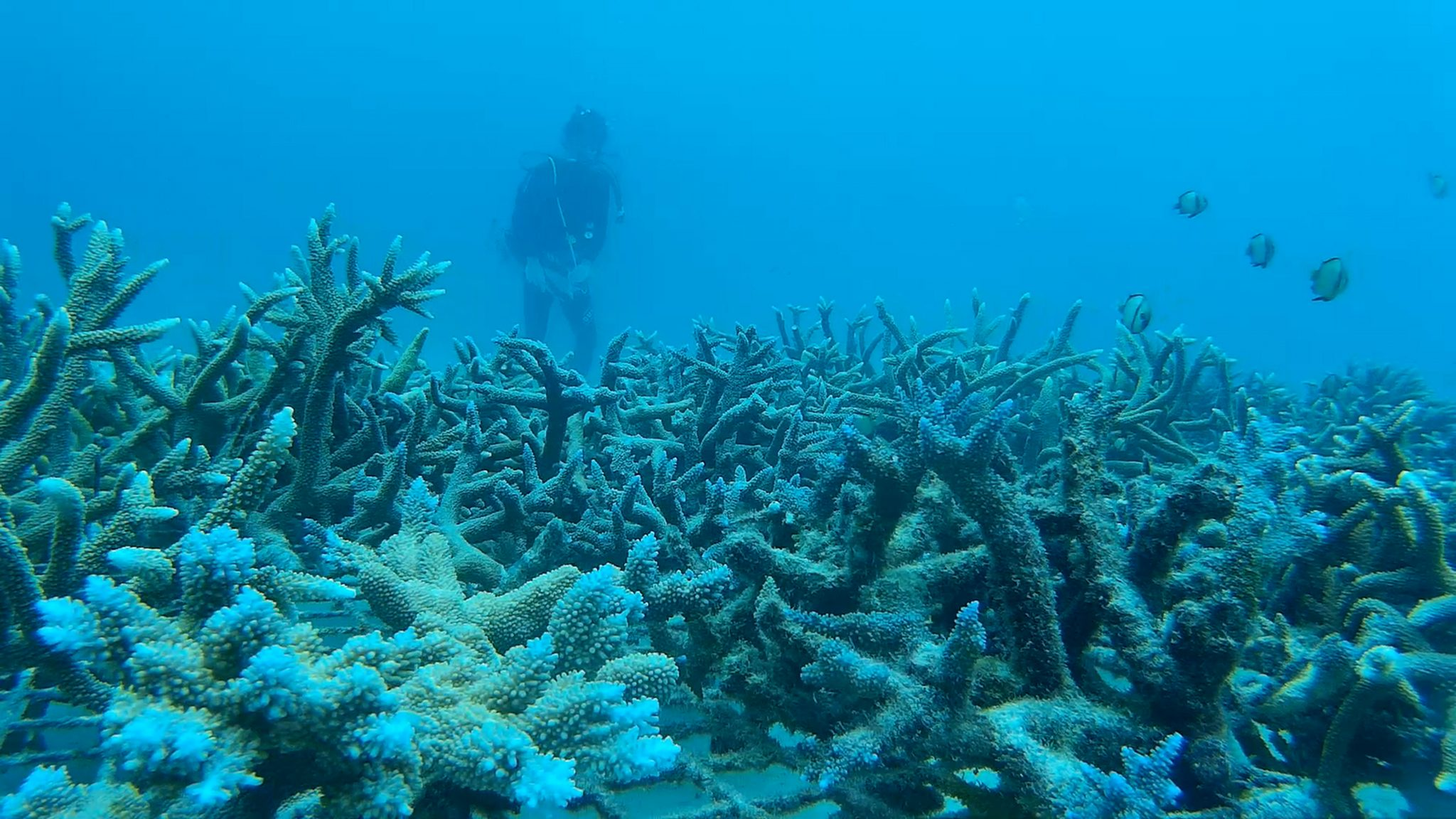 marine conservation diving in vanuatu - Marine Conservation in Vanuatu Review