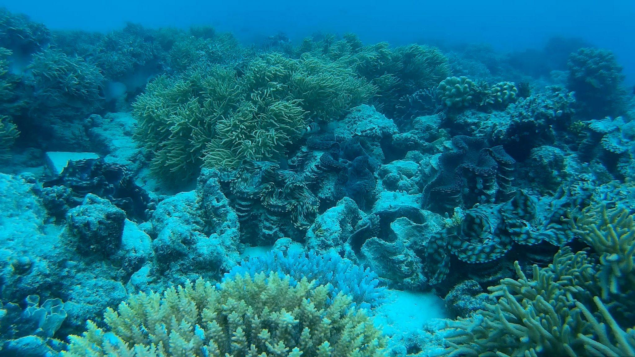 _underwater2