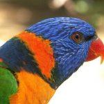 North QLD Wildlife Sanctuary