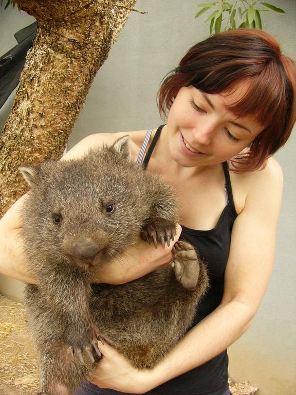 wombat - Wildlife Zoo Experience