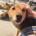Stray Dog Rehab Program Kathmandu