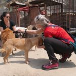 Canine Rehabilitation Nepal Review
