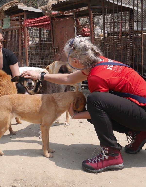 Cover 2 600x768 - Canine Rehabilitation Nepal Review