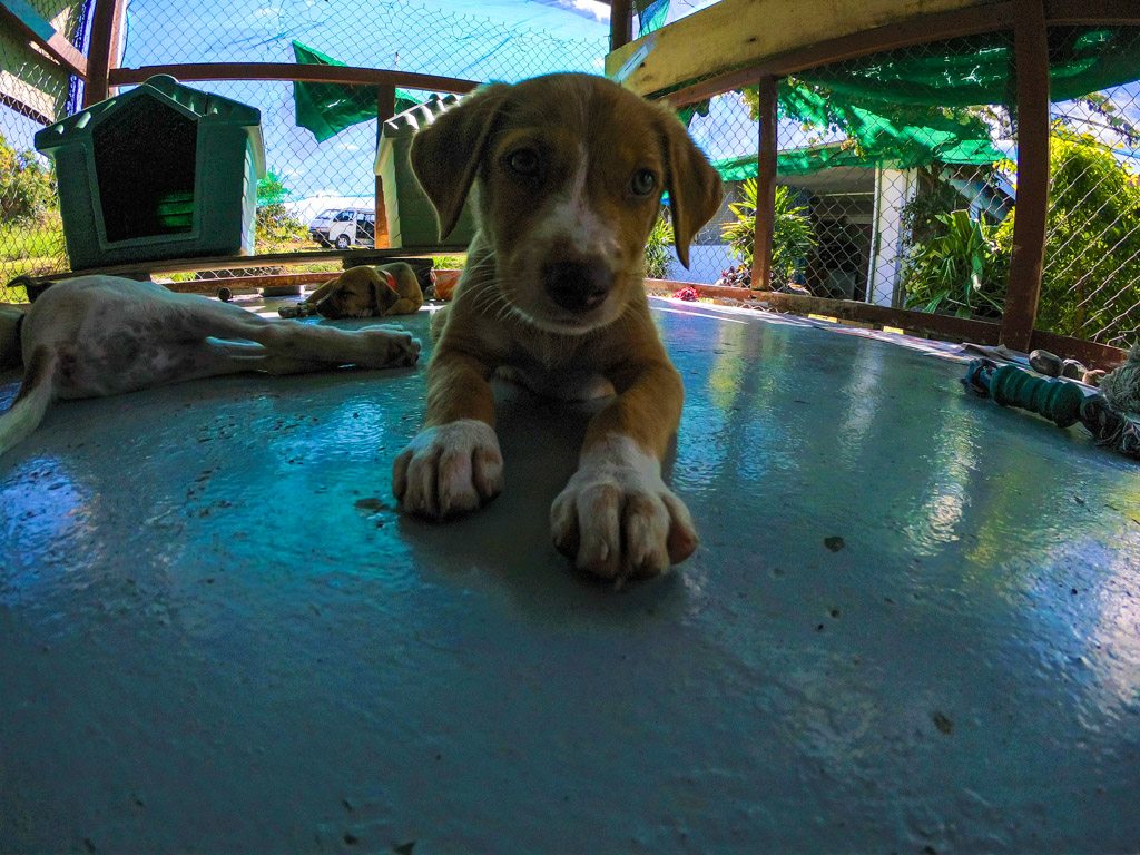 cute dog at Fiji animal shelter