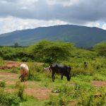 6 Weeks in Kenya: Niklas's Experience