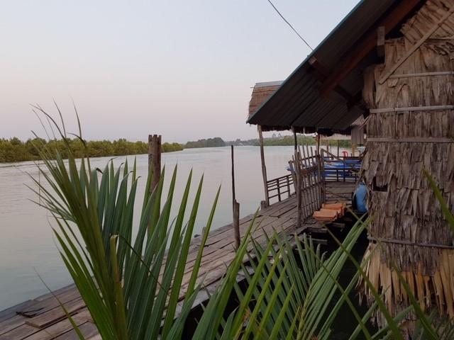 mangrove conservation cambodia
