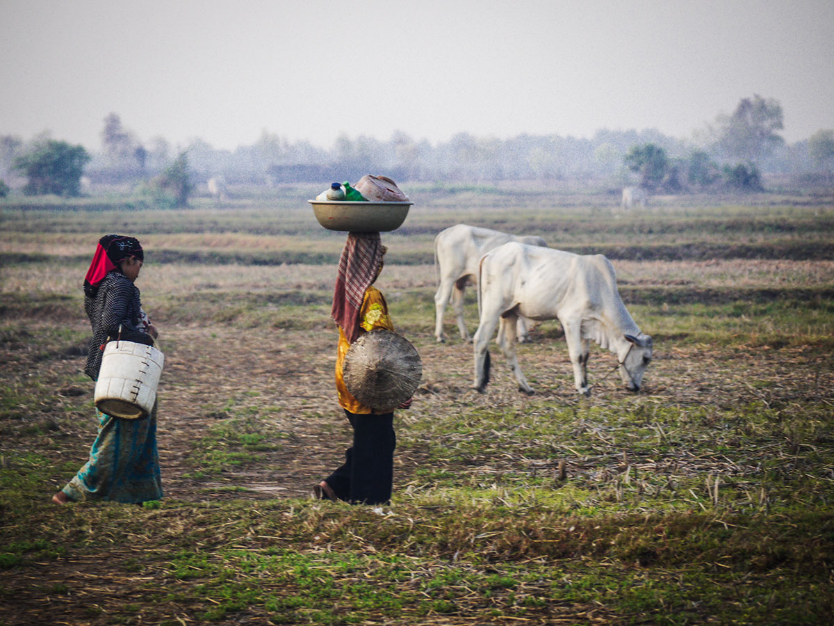 Cambodian women working on farmland