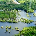 Amazon Jungle Conservation Review