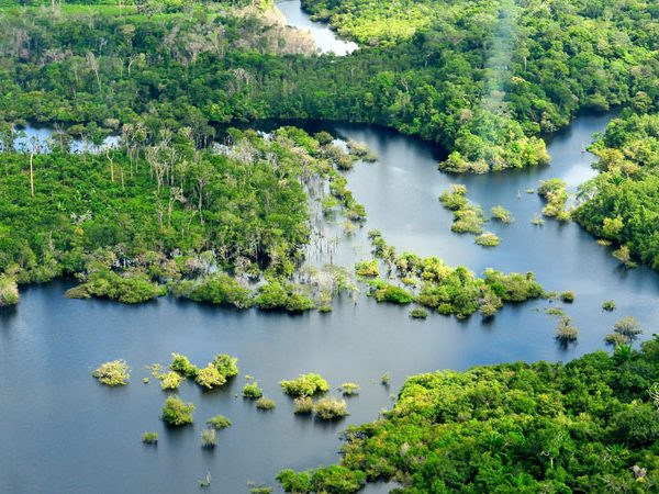 amazon jungle shot with beautiful river mouth and green forests dotted throughout 600x450 - Amazon Jungle Conservation Review