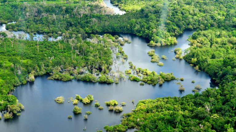 amazon jungle shot with beautiful river mouth and green forests dotted throughout 768x432 - Amazon Jungle Conservation Review