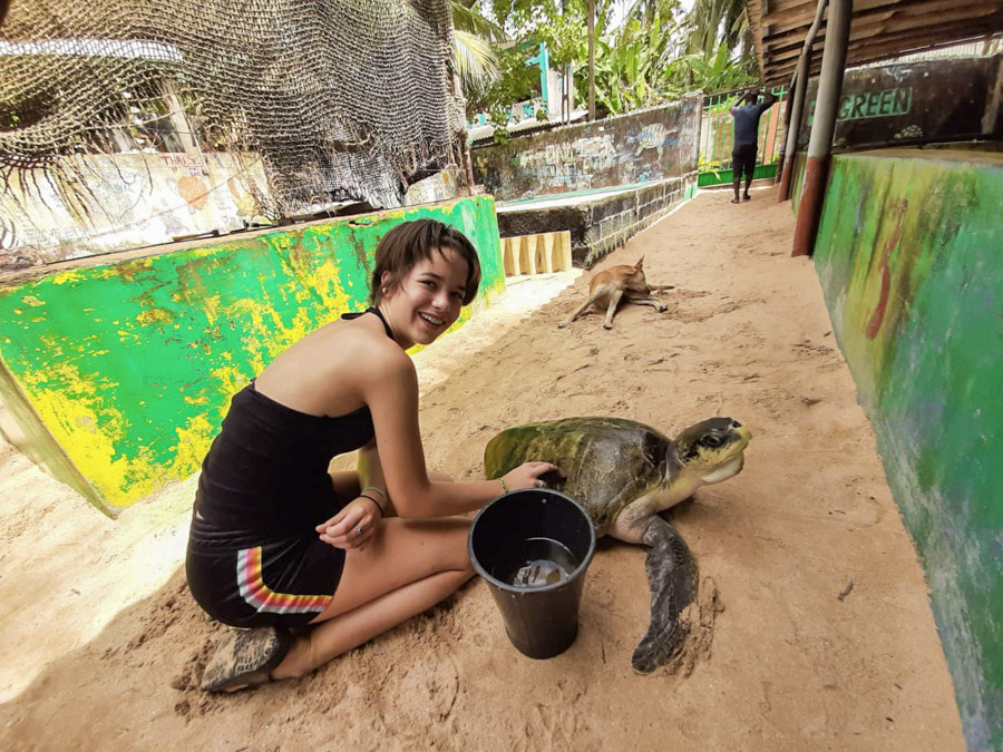 cleaning turtles in Sri Lanka