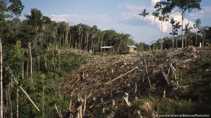 clear cutting deforestation amazon jungle issues - Amazon Jungle Conservation Review