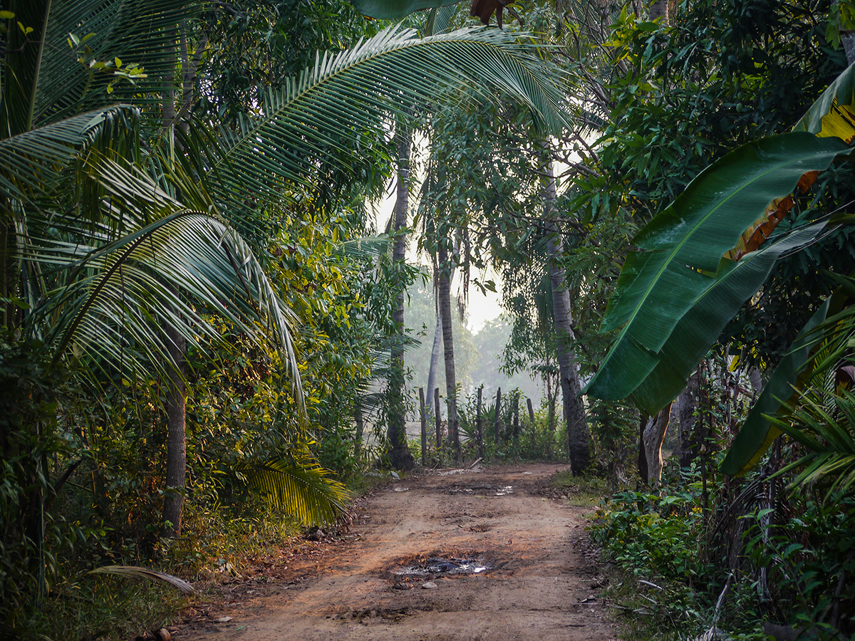 dusty path through the rainforest