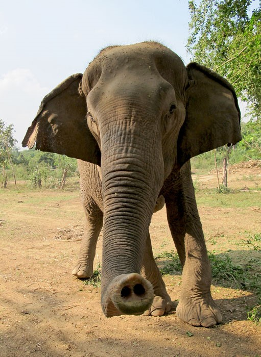 elephant conservation Thailand - Meet the Elephants at the Elephant Conservation Adventure
