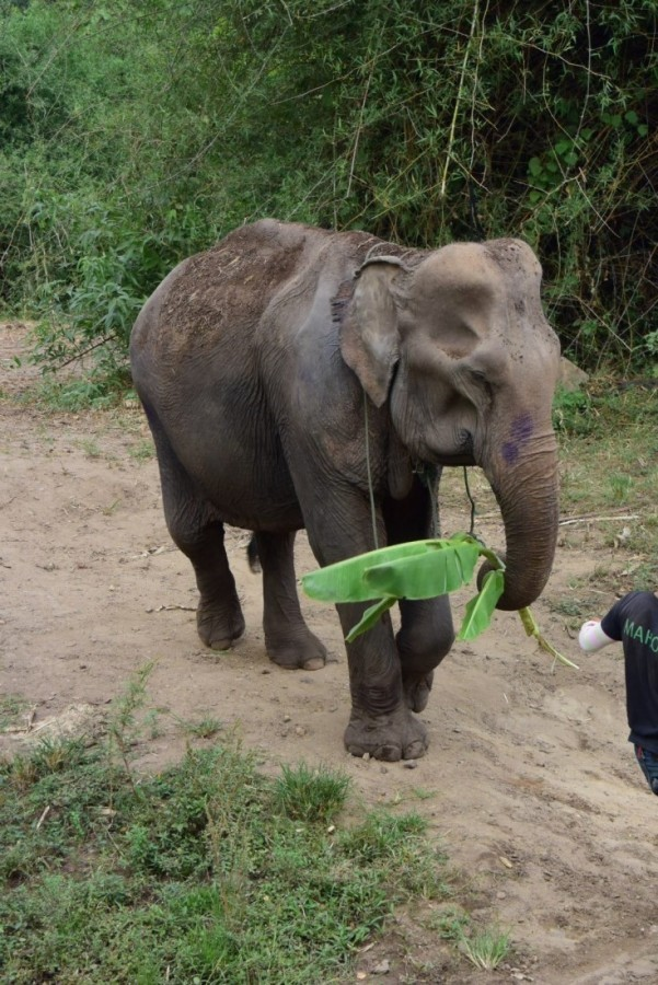 elephant conservation project - Meet the Elephants at the Elephant Conservation Adventure