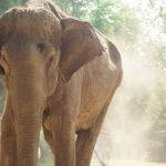 Meet the Elephants at the Elephant Conservation Adventure