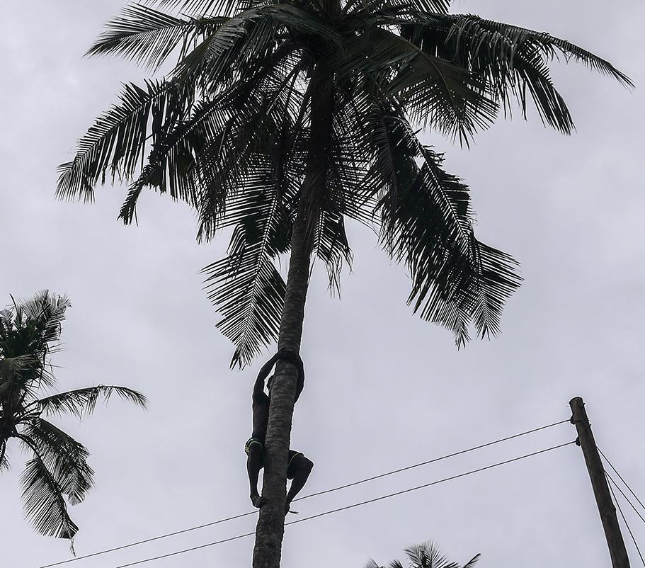 villager climbing a plam tree