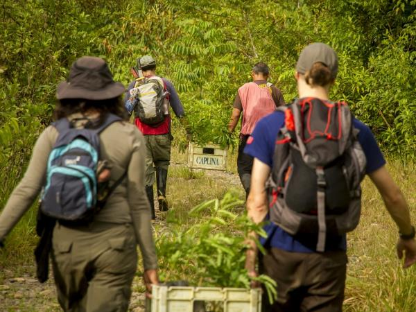 volunteers working together to save amazon forests - Amazon Jungle Conservation Review
