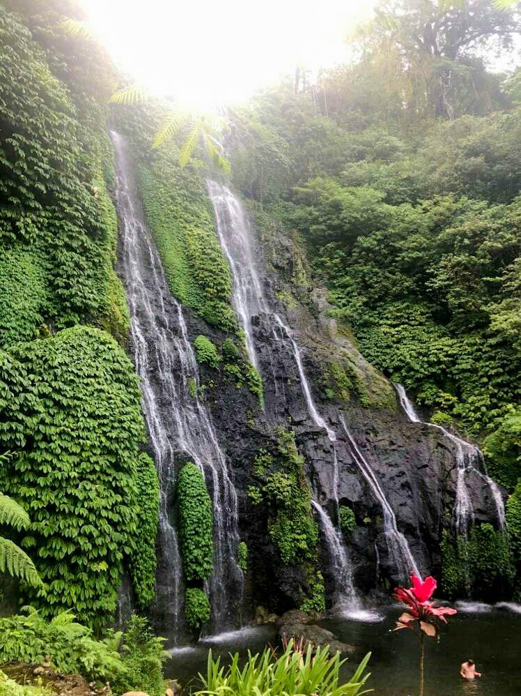 waterfall in lush rainforest