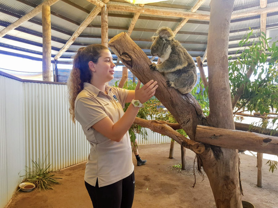 standing with a koala
