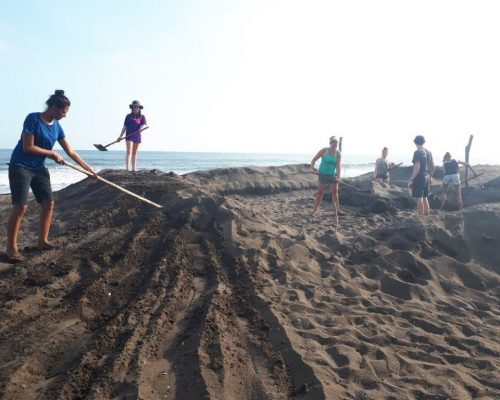 creating a turtle hatchery on beach