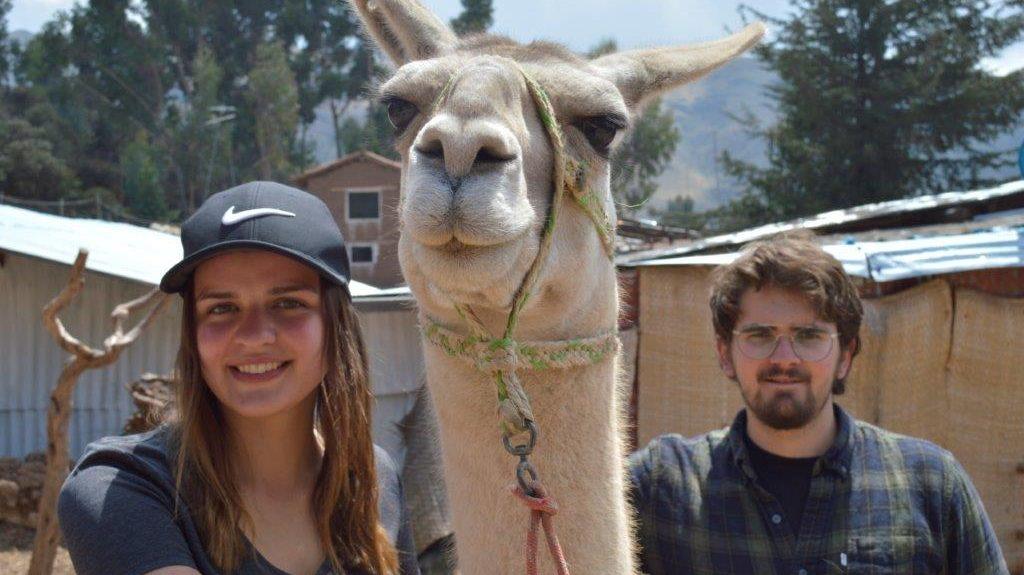 Volunteering at an Alpaca Farm in Cusco, Peru with IVI