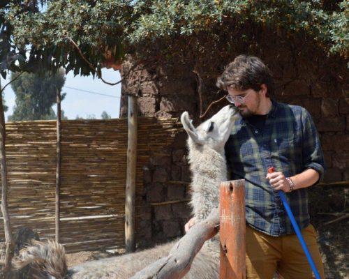 Alpaca farm Peru (8)