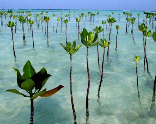 mangrove conservation programs