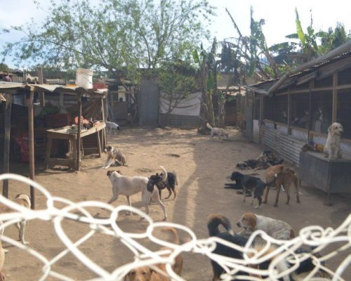 dogs in their enclosure