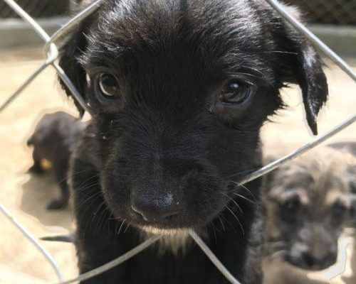 puppy with head through wire fence