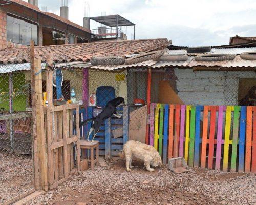 Dog Rehabilitation Peru (1)