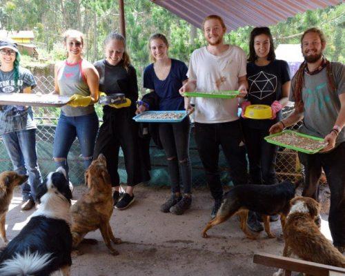 Dog Rehabilitation Peru (7)