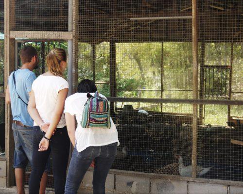 Farm inside the school